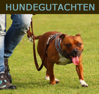 hundegutachten start